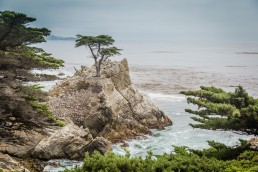 Lone Pine, Pfeiffer Big Sur State Park, California - seen by streb