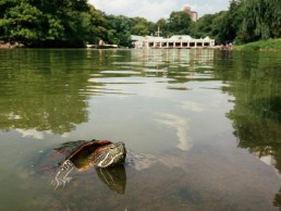 Central Park NYC| seen by streb